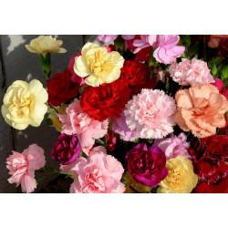 Power of Flowers: 10 Best Skincare Healing Flowers
