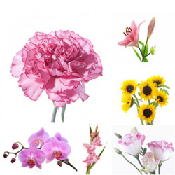 Interesting Facts about Flowers That You Need to Know