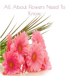 6 interesting Flower related Questions you need to know