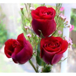What does the different color of flower signify? Surprise to know
