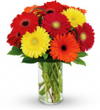 Send Gerberas Flowers UK