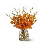 Send Orchids Flowers UK